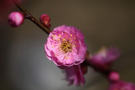 Kyotogyoen1203066