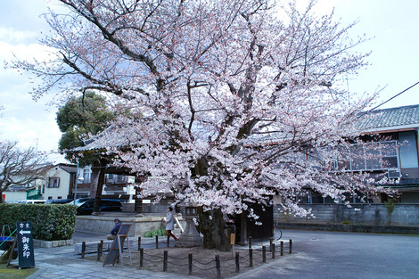 Honmanji1204118