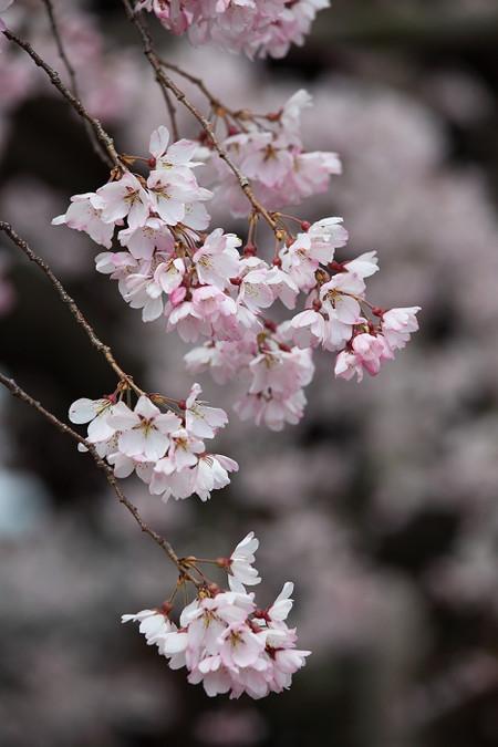 Myoukakuji1204111