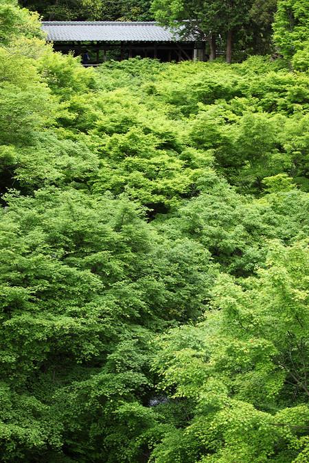 Toufukuji1205152
