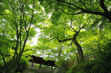 Toufukuji1205155