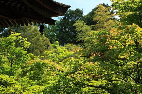 Jyoujyakkouji1205227