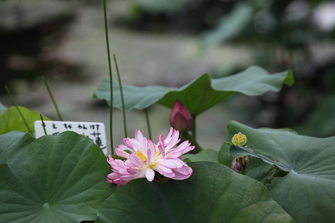 Syoukokuji1208035