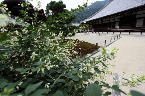 Tenryuji1210076