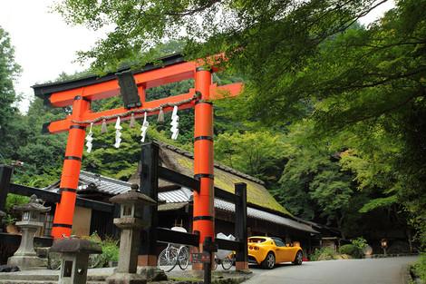 Toriimoto1210065