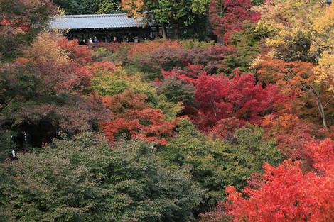 Toufukuji1211152