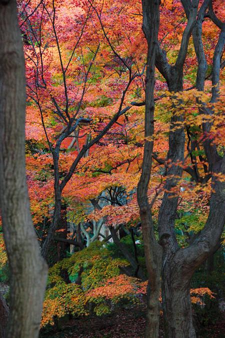 Kyotofuritusyokubutuen1211288