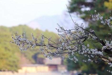 Kyotogyoen1303112