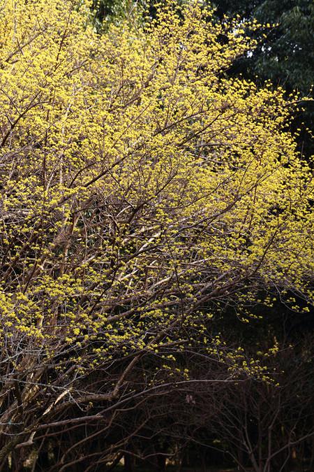 Kyotofuritusyokubutuen1303183