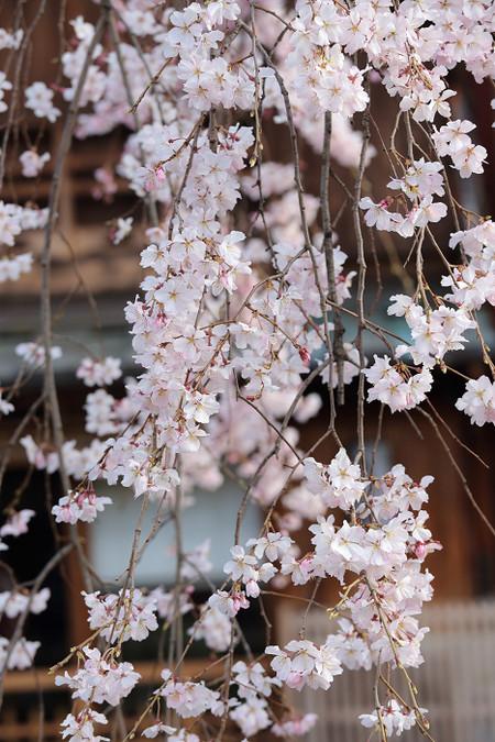 Gionsirakawa1303281