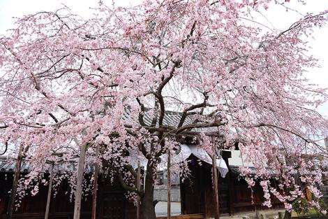 Myoukakuji1303271