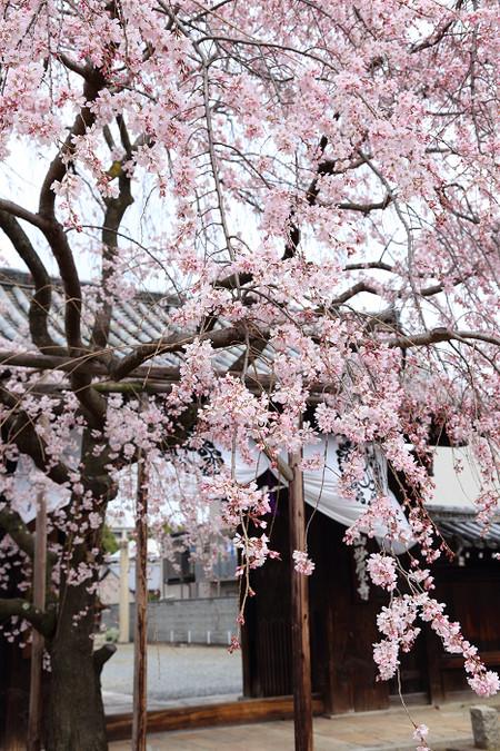 Myoukakuji1303277