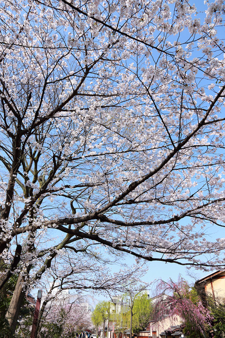 Gionsirakawa1303315