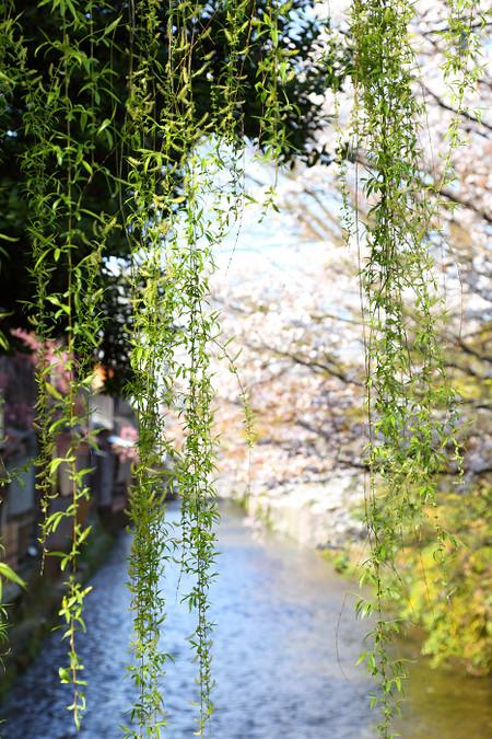 Gionsirakawa1303316