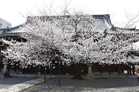 Honpouji3104053