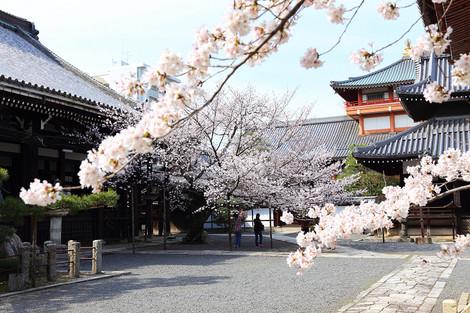 Honpouji3104055