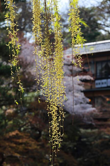 Maruyamakouen130407