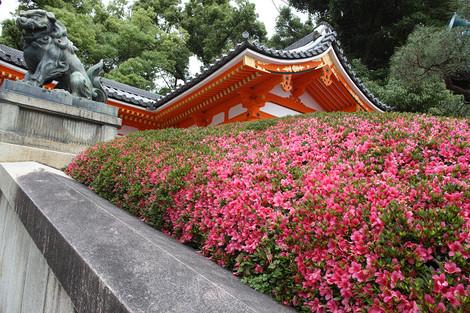 Yasakajinjya1306087
