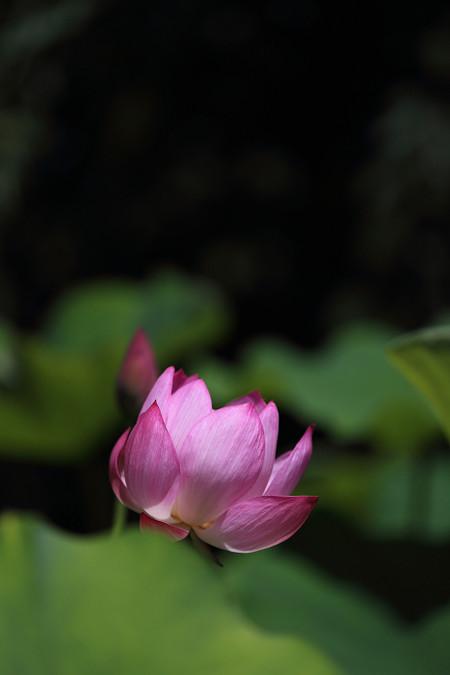 Ryuhonji1307066