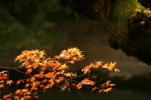 kiyomizu0511261