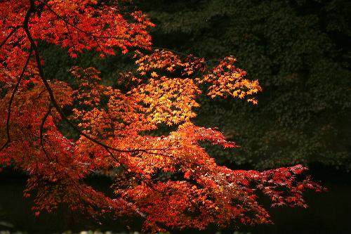 kiyomizu0511263