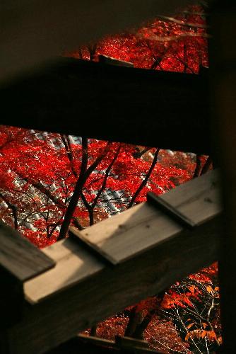 kiyomizubutai0512011