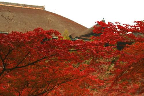 kiyomizubutai0512012