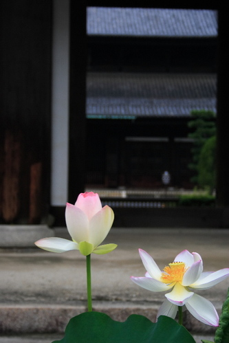 Toufukuji0607012
