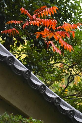 Toufukuji06120718