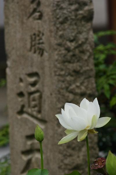 Toufukuji0707212