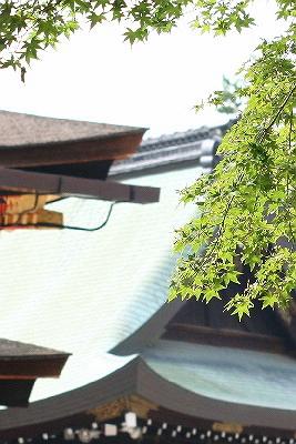yasaka15