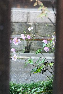 yasakanotou0510293