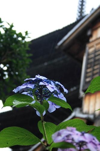 Yasakanotou0606171