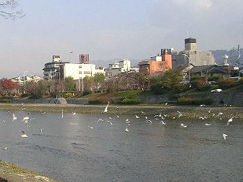 yurikamome12