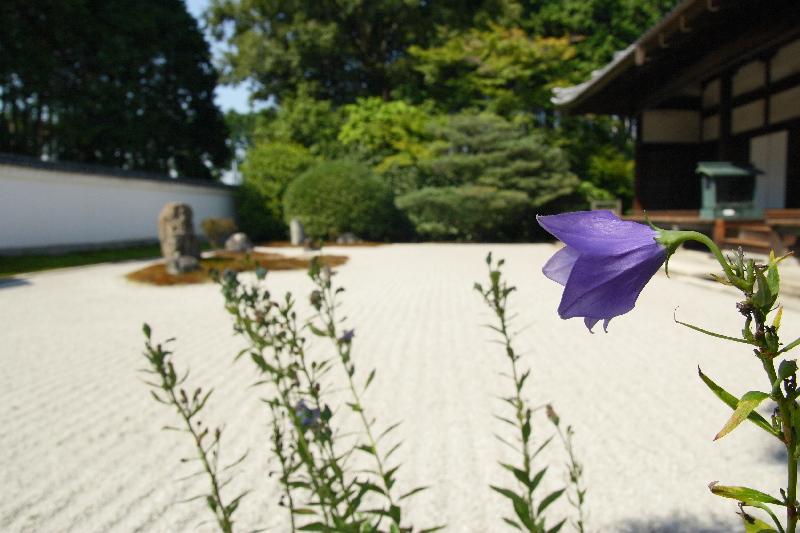 Daikoumyouji0709261