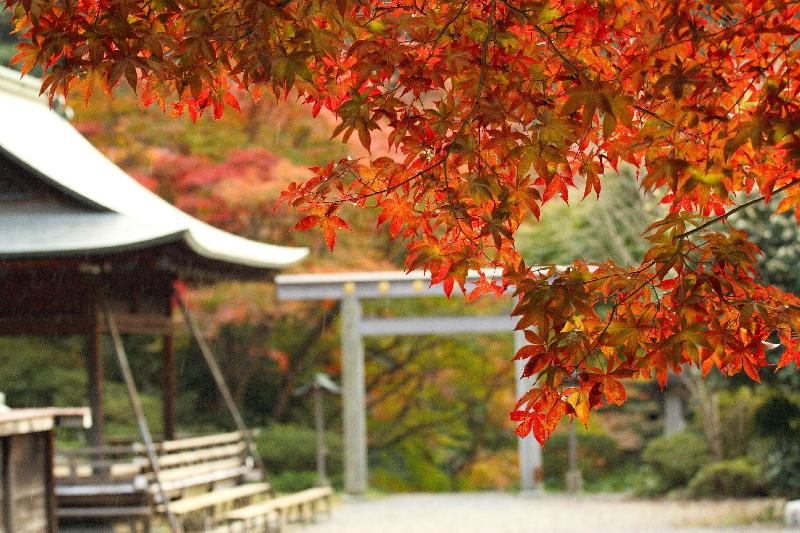 Himukai0711257