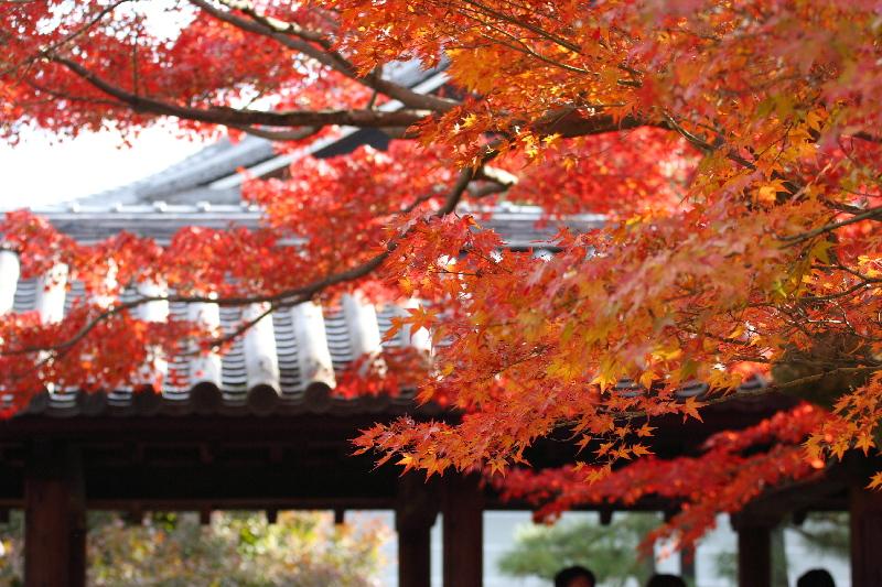 Toufukuji07112610