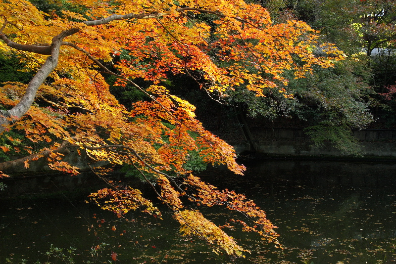 Kiyomizudera0711282