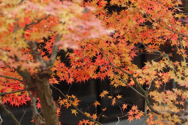 Kousyouji0712193
