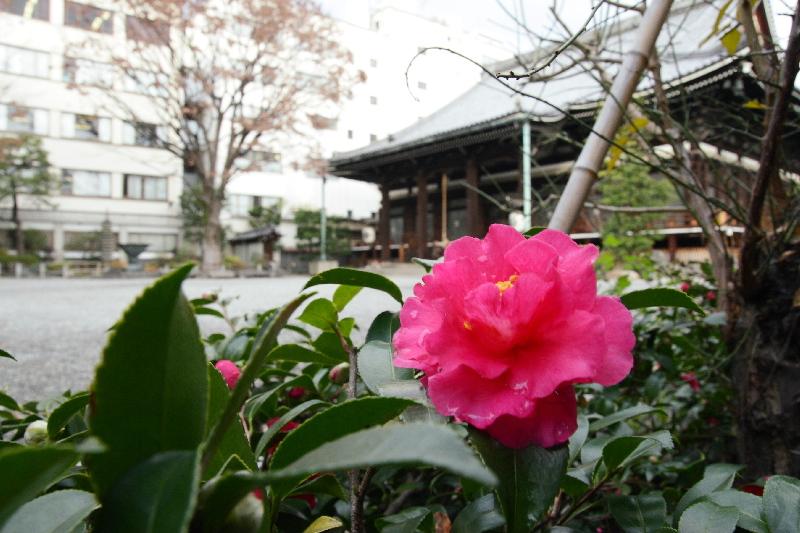 Honnouji0712283