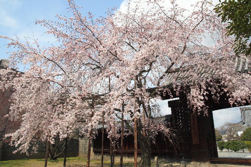 Myoukakuji0803301