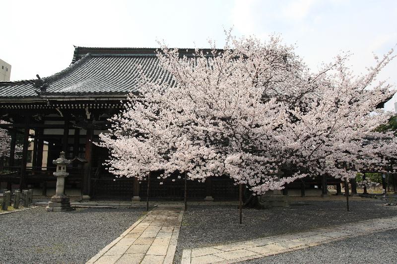 Honpouji0804083