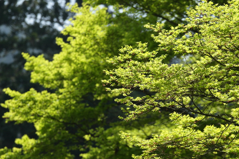 Enrayakuji0805065