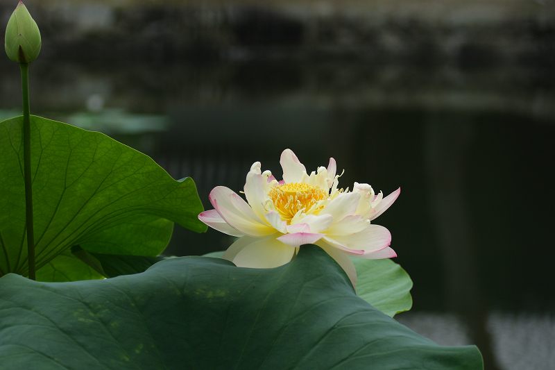 Syoukokuji08071015