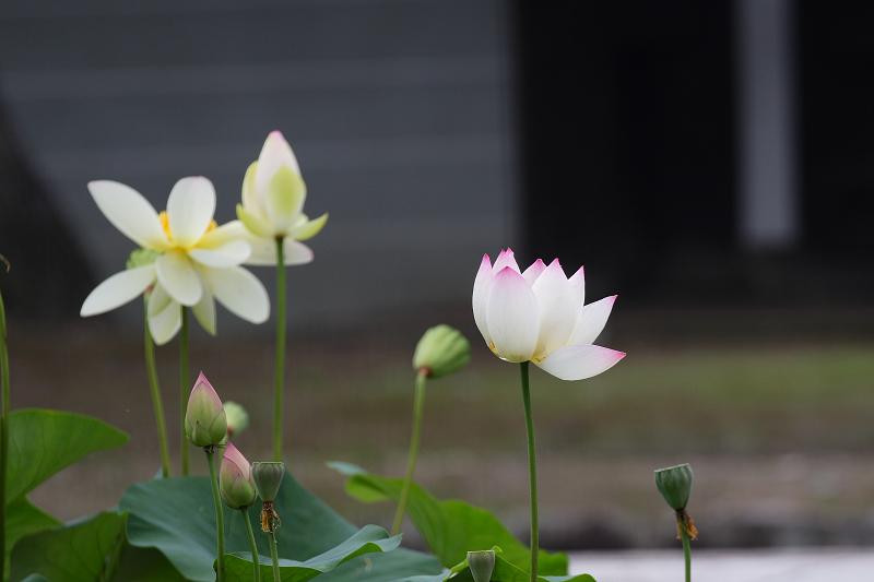 Syoukokuji0807105