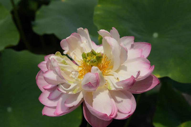 Ryuuhonji0807105