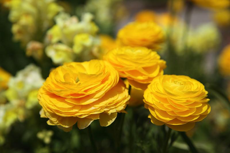 Garden09051110