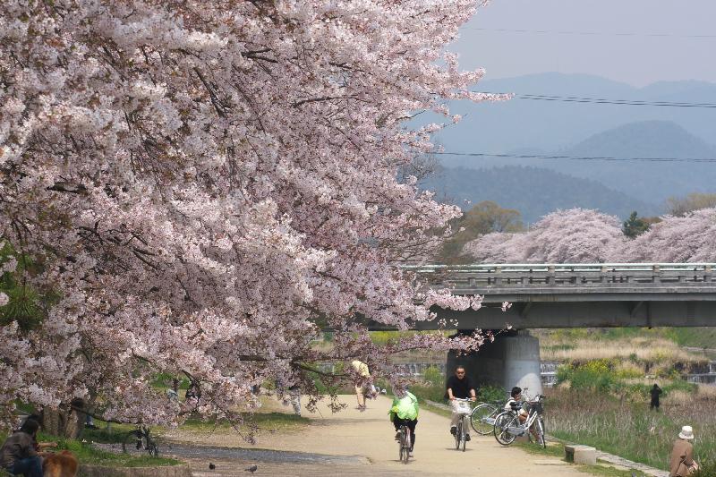 Kamogawa0704151