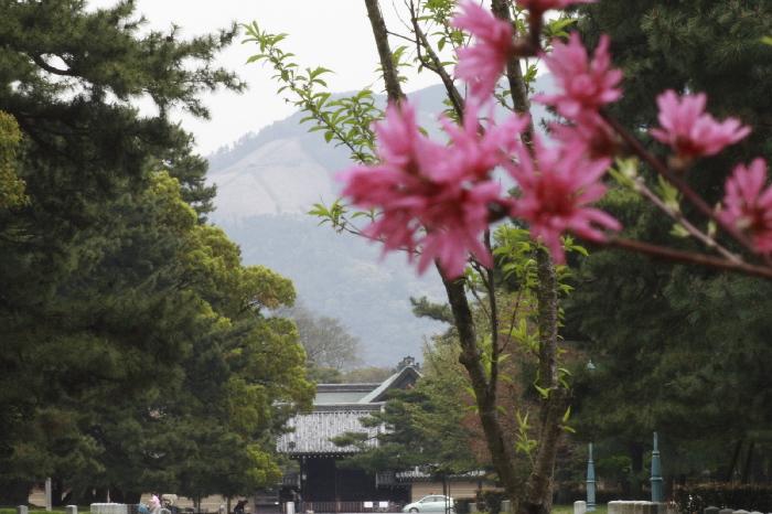 Kikumomo0604231