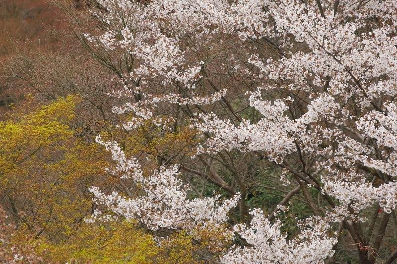 Kiyomizu0704016